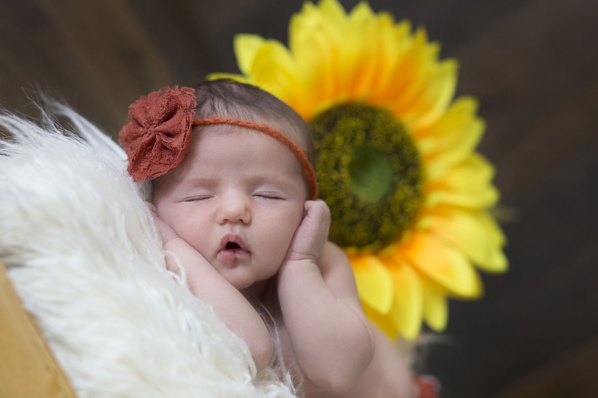 Álbum de fotos de recién nacidos